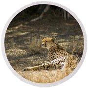 The Cheetah Wakes Up Round Beach Towel