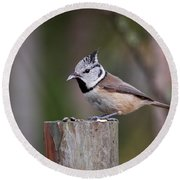 The Crested Tit Having Lunch Round Beach Towel