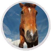 The Curious Horse Round Beach Towel