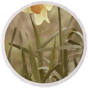 The Daffodil In Partial Sepia Round Beach Towel