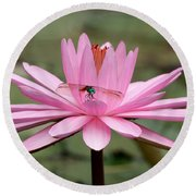 The Dragonfly And The Pink Water Lily Round Beach Towel