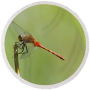 The Dragonfly Hangs On Round Beach Towel