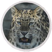 The Eyes Of A Jaguar Round Beach Towel