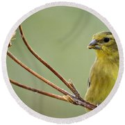 The Finch  Round Beach Towel