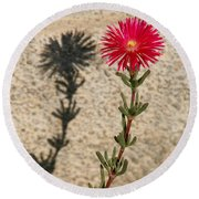The Flower And Its Shadow Round Beach Towel