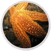The Great Starfish Round Beach Towel
