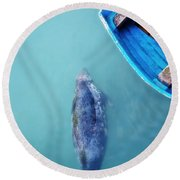 The Grey Seal Round Beach Towel