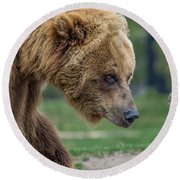 The Grizzly In Spring Round Beach Towel