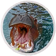 The Hungry Hippo Round Beach Towel