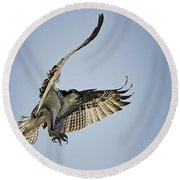 The Magnificent Osprey  Round Beach Towel