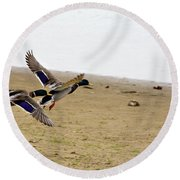 The Mallard Ducks Flight Round Beach Towel