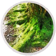 The Moss Covered Roots Round Beach Towel