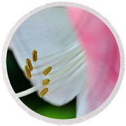 The Naked Lady - Hippeastrum Round Beach Towel