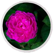 The Old Red Rose Round Beach Towel
