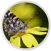 The Painted Lady And The Daisy  Round Beach Towel