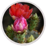 The Prickly Beauty  Round Beach Towel