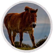 The Przewalski Horse Equus Przewalskii Round Beach Towel