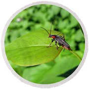 The Rednecked Bug On The Leaf Round Beach Towel
