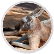 The Resting Roo Round Beach Towel