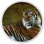 The Sumatran Tiger  Round Beach Towel