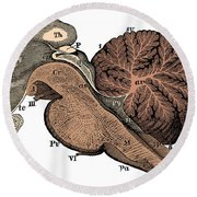 Third And Fourth Ventricles Of The Brain Round Beach Towel