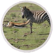 Thomson's Gazelle Running At Full Speed Round Beach Towel