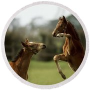 Thoroughbred Foals Playing Round Beach Towel