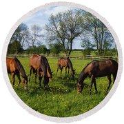 Thoroughbred Horses, Yearlings, Ireland Round Beach Towel