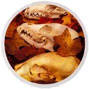 Three Animal Skulls Round Beach Towel