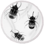 Three Beetles X-ray Round Beach Towel