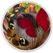 Three Butterflies On Protea Round Beach Towel