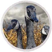 Three Canada Geese In An Autumn Cornfield Round Beach Towel