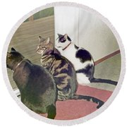 Three Cats Looking Out Into The Forest Round Beach Towel