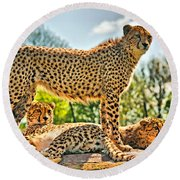 Three Cheetahs Round Beach Towel