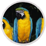 Three Parrots Round Beach Towel