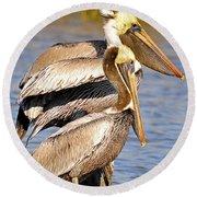 Three Pelicans On A Stump Round Beach Towel