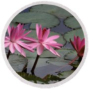 Three Sweet Pink Water Lilies Round Beach Towel