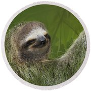 Three-toed Sloth Round Beach Towel by Heiko Koehrer-Wagner