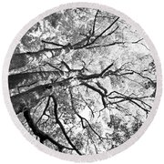 Three Trees Reach For The Sky Black And White Round Beach Towel