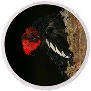 Tidying Up - Magellanic Woodpecker Preening Round Beach Towel