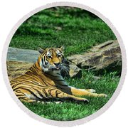 Tiger - Endangered - Lying Down - Tongue Out Round Beach Towel