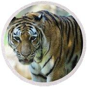 Tiger - Endangered - Wildlife Rescue Round Beach Towel
