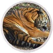 Tiger Behavior Round Beach Towel