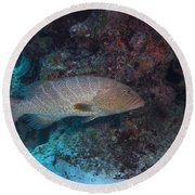 Tiger Grouper Swimming Along The Bottom Round Beach Towel