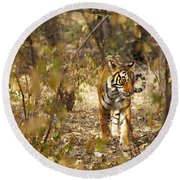 Tiger In The Undergrowth At Ranthambore Round Beach Towel
