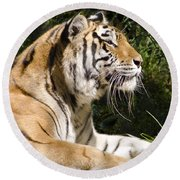 Tiger Observations Round Beach Towel