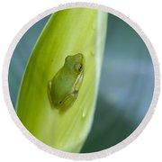 Tiny Tree Frog Cradle Round Beach Towel
