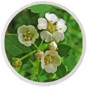 Tiny White Flowers Of A Bush Round Beach Towel