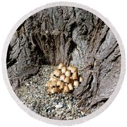 Toadstools In The Gravel Round Beach Towel by Will Borden