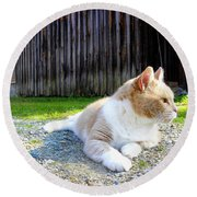 Toby Old Mill Cat Round Beach Towel by Sandi OReilly